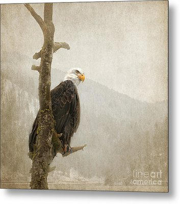 Wisdom Metal Print by Beve Brown-Clark Photography