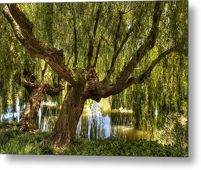 Wisdom Willow Metal Print
