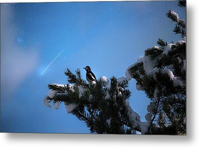 Wish Upon A Shooting Star Metal Print