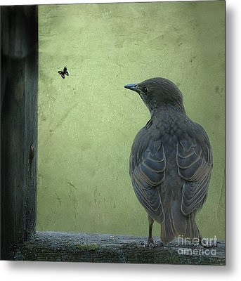 Metal Print featuring the photograph Wishful Thinking by Jan Piller