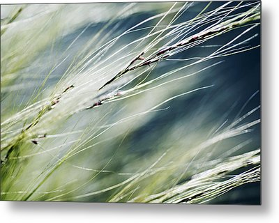 Wispy Grass Metal Print by Ray Laskowitz - Printscapes