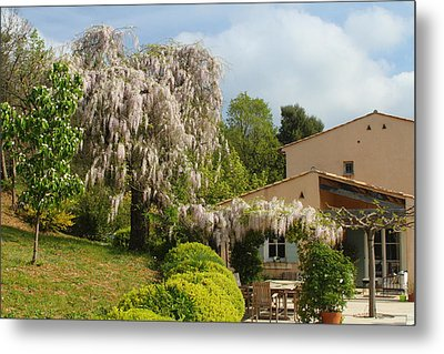 Metal Print featuring the photograph Wisteria by Richard Patmore