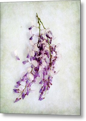 Metal Print featuring the photograph Wisteria Still Life by Louise Kumpf