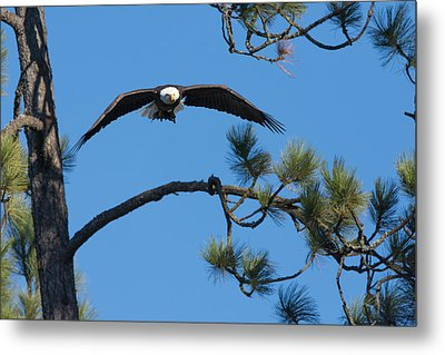 With Catch Metal Print