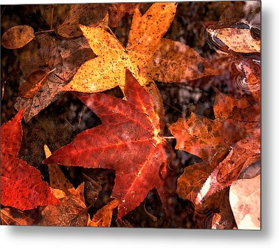 With Love - Autumn Pond Metal Print by Theresa  Asher