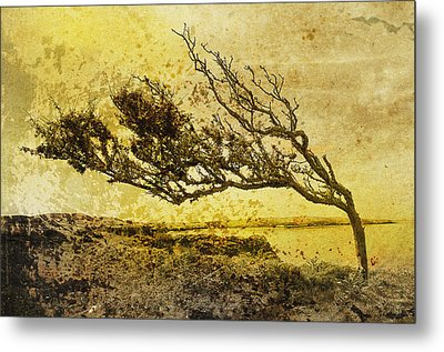With The Flow Metal Print by Gareth Davies