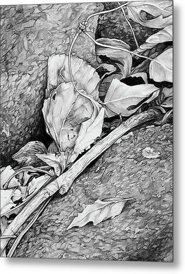 Metal Print featuring the drawing Withered Leaves by Aaron Spong