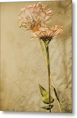 Withered Metal Print by Sally Engdahl