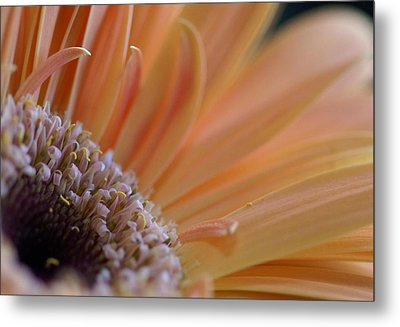 Within Nature Metal Print by Patricia M Shanahan