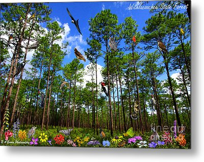 Withlacoochee State Forest Nature Collage Metal Print by Barbara Bowen