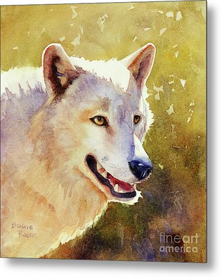 Wolf In Morning Light Metal Print by Bonnie Rinier
