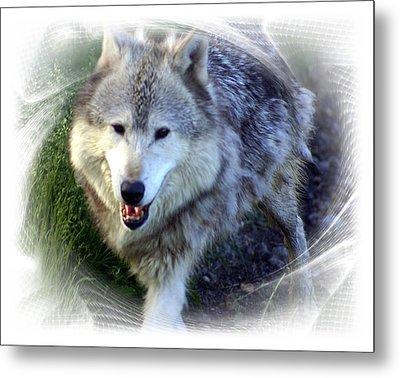 Wolf Metal Print by Marty Koch