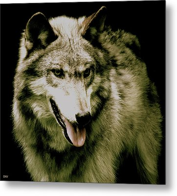 Metal Print featuring the mixed media Wolf Of The Night by Debra     Vatalaro