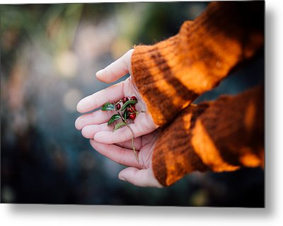 Woman Hands Holding Cranberries Metal Print by Aldona Pivoriene