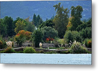 Woman Resting By A Lake Metal Print