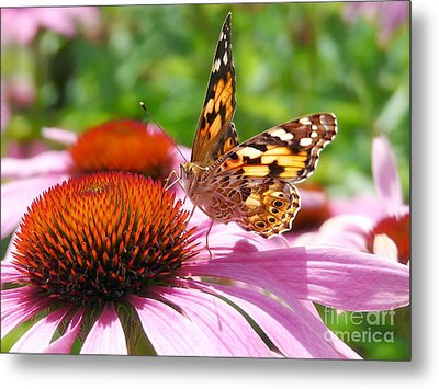 Butterfly Metal Print by Angela Doelling AD DESIGN Photo and PhotoArt