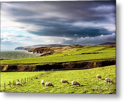 Metal Print featuring the photograph Wonders Of Thrumster by Anthony Baatz