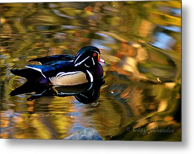 Wood Duck Metal Print by Clayton Bruster