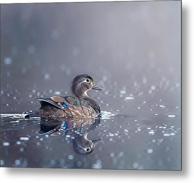 Metal Print featuring the photograph Wood Duck Hen by Bill Wakeley