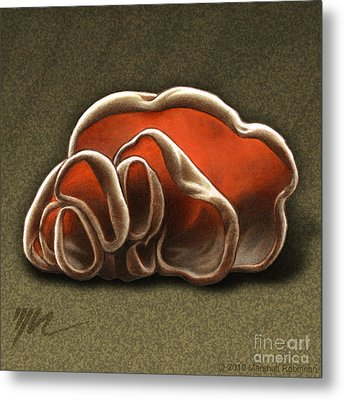 Wood Ear Mushrooms Metal Print by Marshall Robinson