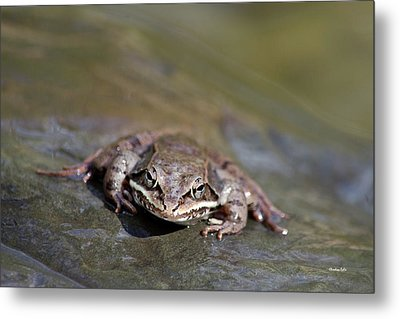 Metal Print featuring the photograph Wood Frog Close Up by Christina Rollo