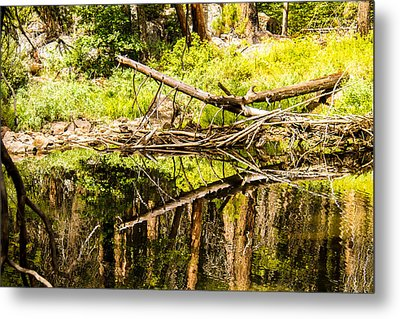 Wood Reflections Metal Print by Brian Williamson