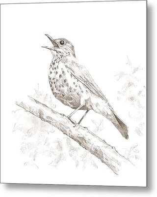Wood Thrush Metal Print