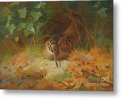 Woodcock Metal Print by Celestial Images