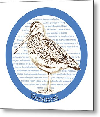 Woodcock Metal Print by Greg Joens