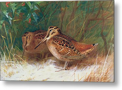 Woodcock In The Undergrowth Metal Print by Archibald Thorburn
