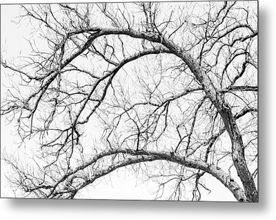 Wooden Arteries Metal Print by Az Jackson