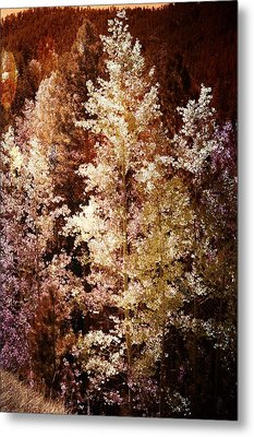 Woodland Beauty Metal Print by Joseph Frank Baraba