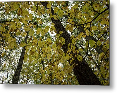 Metal Print featuring the photograph Woodland Canopy by Andrew Pacheco