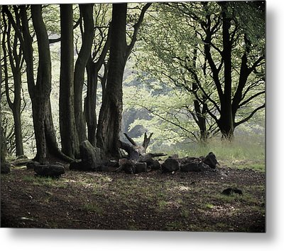 The Woodland Clearing  Metal Print by Philip Openshaw