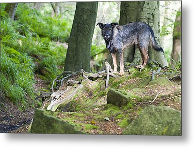 Woodland Dog Metal Print