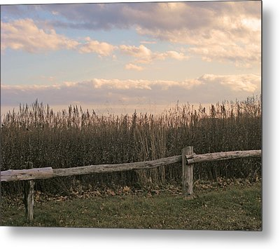 Woodland Fences - Marshes Of Fairfield County Ct Metal Print by Margie Avellino