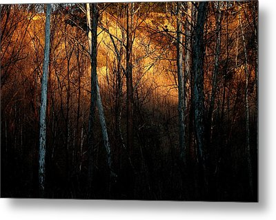 Woodland Illuminated Metal Print by Bruce Patrick Smith