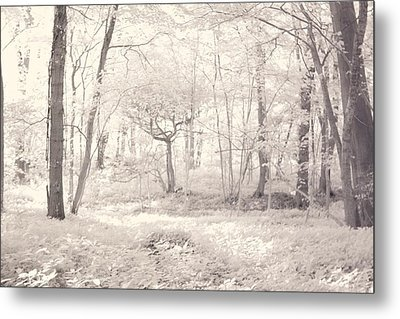 Metal Print featuring the photograph Woodland by Keith Elliott