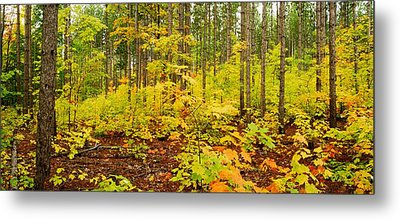 Woodland Panorama Metal Print by Michael Peychich