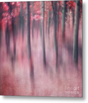 Woodland Sanctuary Metal Print by Priska Wettstein