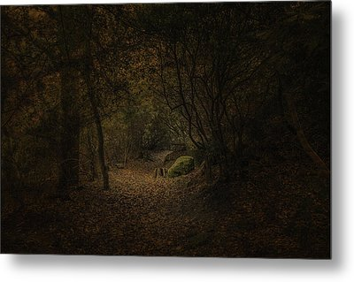 Metal Print featuring the photograph Woodland Walk by Ryan Photography
