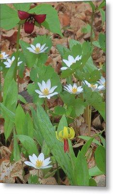 Woodland Wildflowers Metal Print by John Burk