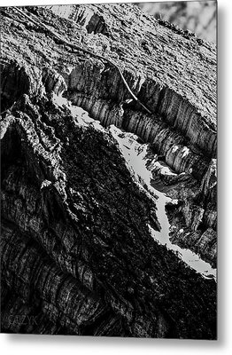 Woodoh1 Metal Print by Cazyk Photography