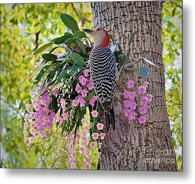 Woodpecker Heaven Metal Print