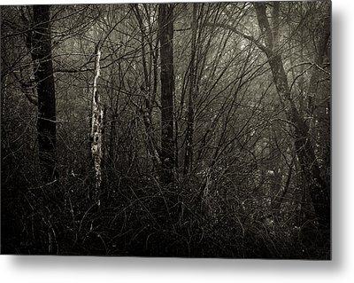 Woodprecker Tree Metal Print by Bob Orsillo