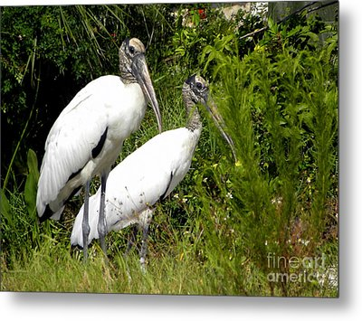 Metal Print featuring the photograph Woodstork Couple by Terri Mills