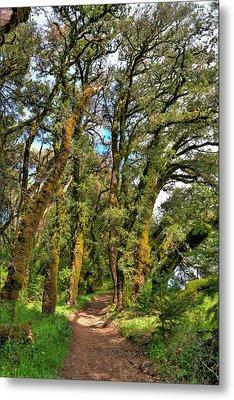 Woodsy Trail Metal Print by Paul Owen