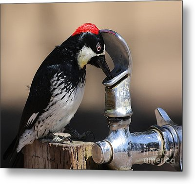 Woody And The Water Fountain Metal Print by Wingsdomain Art and Photography