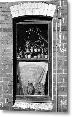 Woolloomolloo Window With Cats Metal Print by Barry Culling
