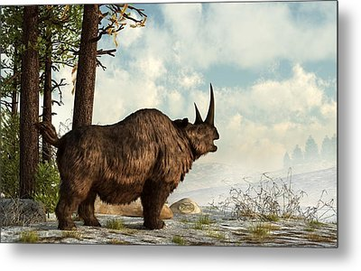 Woolly Rhino Metal Print by Daniel Eskridge